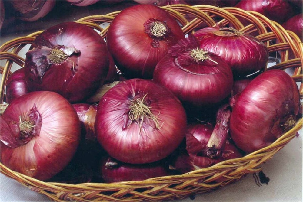 Rare  Onions Yaltinskiy-Yallta Organic Russian Heirloom Vegetable  200pcs.