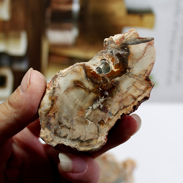50 gr/teil natürliche steine und mineralien kristall woodstone baum für bahn hause dekoration holz madagaskar