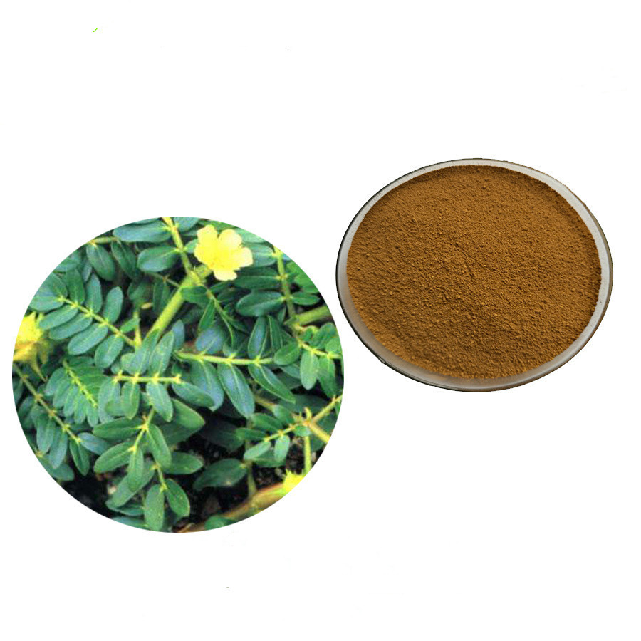 50g-1000g 90% saponins Tribulus Terrestris Extract Powder health care Lowering blood pressure, anti-aging, improving immunity