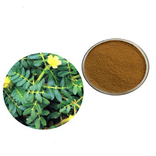 50g-1000g 90% saponins Tribulus Terrestris Extract Powder health care