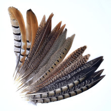 10Pcs/Lot Natural Pheasant Feathers for Needlework 15-20cm Crafts Feather Decor Handicraft Accessories Plumes Plume Decoration