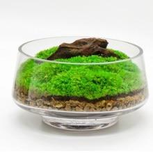 1 bolsa de Micro paisaje verde plantas artificiales verde asta Moss clásico inmortal Moss adorno DIY casa jardín decoración