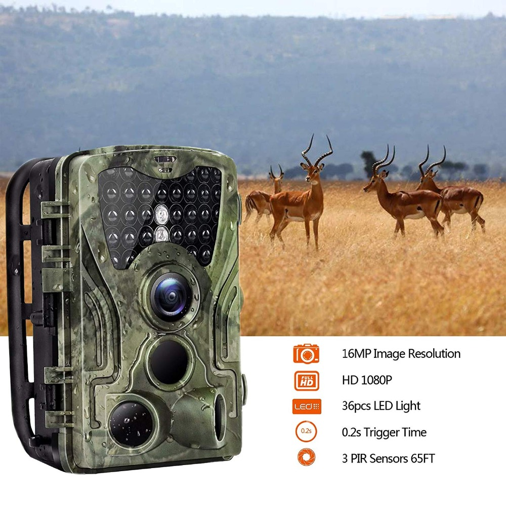 noturna wildlife vigilância rastreamento cams