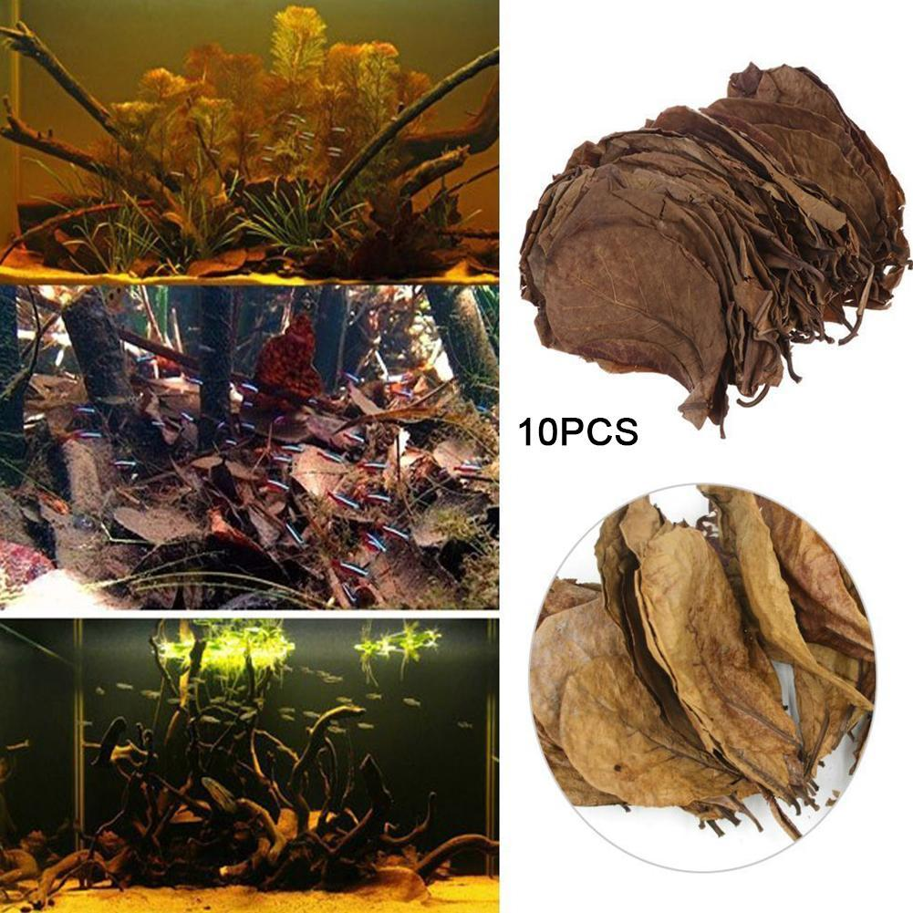 20/10PCS Natural Terminalia Catappa Leaves Aquarium Decoration Fish Tank Cleaning Tools Water Treatment Aquarium Accessories