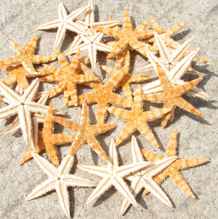 20~500PCS Cute Small Mini Natural Starfish Sea Star Shell Beach Cottage Deco Wedding Craft DIY Making Wholesale Price