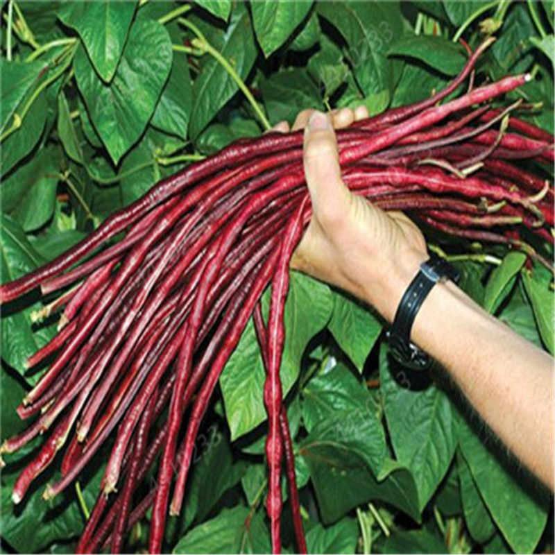 Dijual 100 Pcs/Tas Bonsai Kacang Lezat Sayur Buncis, Kacang Hijau, Pertumbuhan Alami Makanan Sehat Taman Tanaman