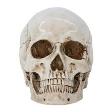 Halloween Resin Craft Skull Head Ornaments Simulation 1:1 Human Anatomy Specimen Innovative Props