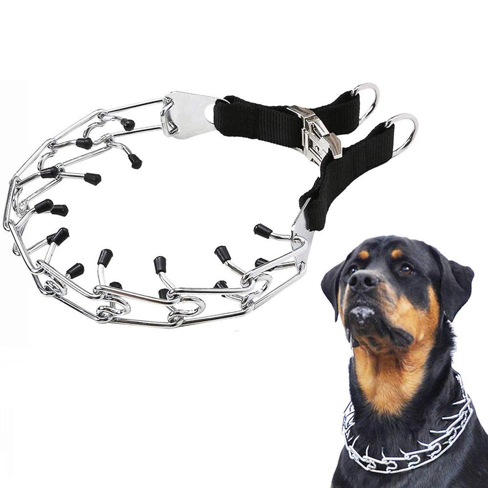 Pet shop supplies for animals - Zoobig