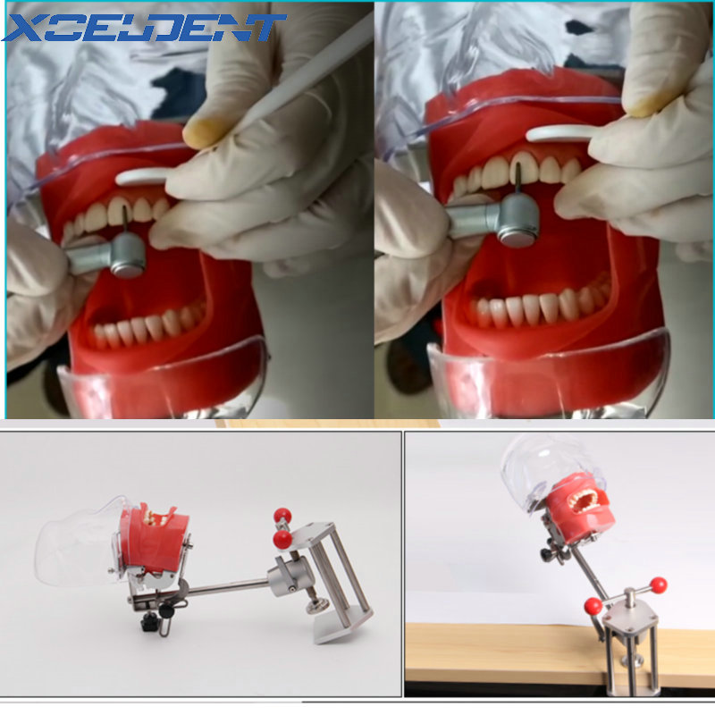 1 Set Dental Simulator Nissin Manikin Phantom Head Dental Phantom Head Model With New Style Bench Mount For Dentist Teaching