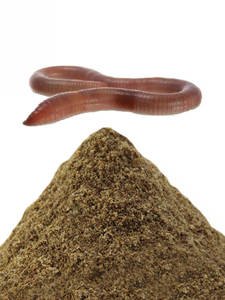 Bait Material-Accessories-Product Earthworm-Flavor Fishing-Feeder Carp 10g for 1bag