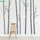 Birch Trees Forest W...