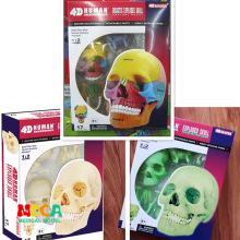 4D цветная человеческая Дидактическая Взрывная модель черепа, медицинская научная модель скелета, собранная модель