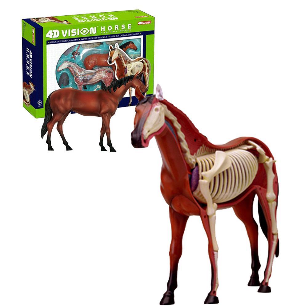 Animal Anatomy Toy Educational Medical Anatomic Animal Model Puzzels For Children Skeleton Educational Science Toys