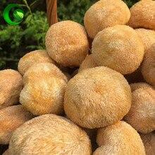Dried Hericium Erinaceus,Lion's Mane Mushroom,hericium,monkey Head Mushroom,bear's Head Tooth Mushroom,Lions Mane Mushroom