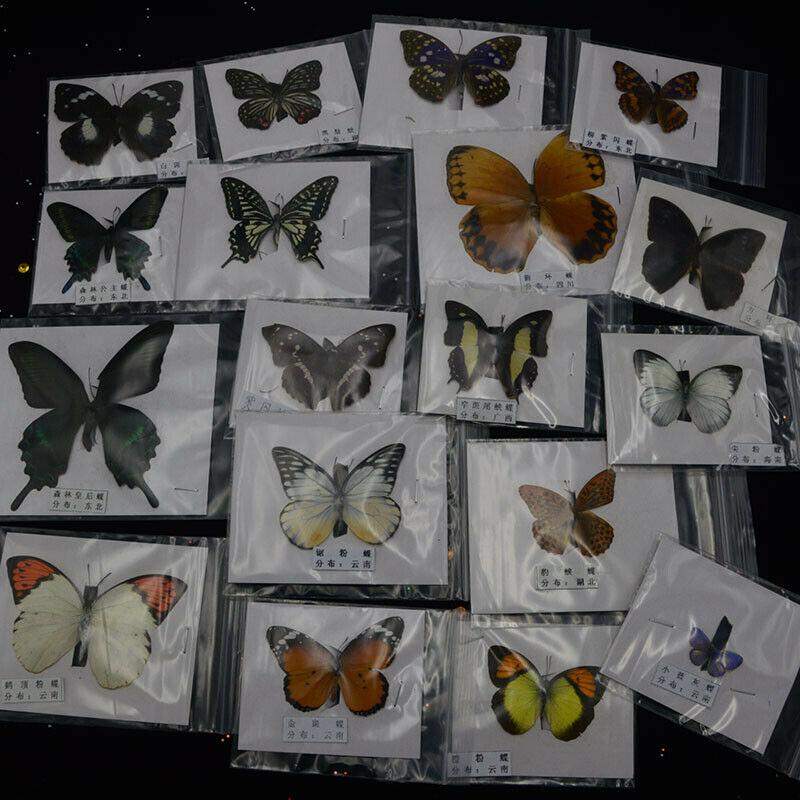 10Pcs Natural Unmounted Rhopalocera / Le Papillon / Butterfly Specimen Artwork Material Decor