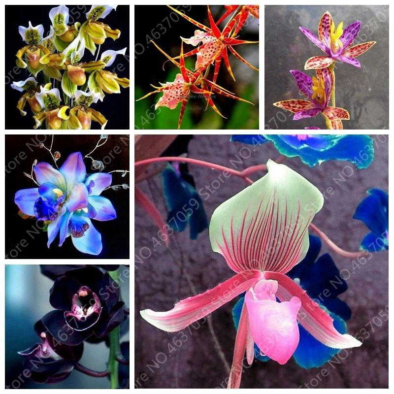 200 Pcs Exotic Orchid Bonsai Flower Office Desktop Flowers, Indoor Garden Flore Plants Rare Gifts For Kids For Flower Pot Planta