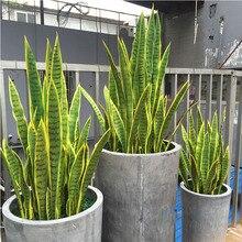 Artificial Succulent Plant Agave Desert Plants Sansevieria Trifasciata Prain Home Office Decor Fake Bonsai Tropical Leaves