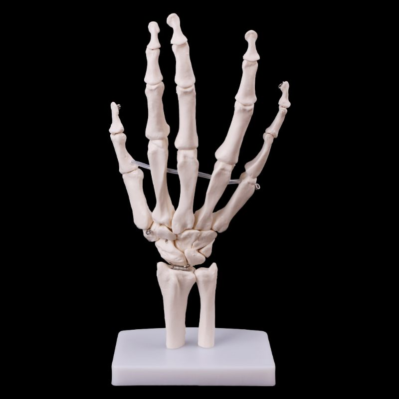 Hand Joint Anatomical Skeleton Model Human Medical Anatomy Study Tool Life Size LX9A