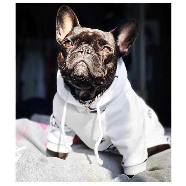 Cute Cotton Dog Hoodies