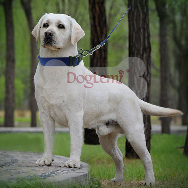 Pet Supplies Europe And America Export Solid Color Nylon Dog Collar Adjustable Collar Traction Dog Traction