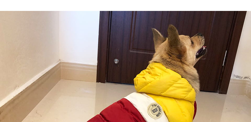 Nueva ropa de invierno para perros, abrigo impermeable con capucha 19