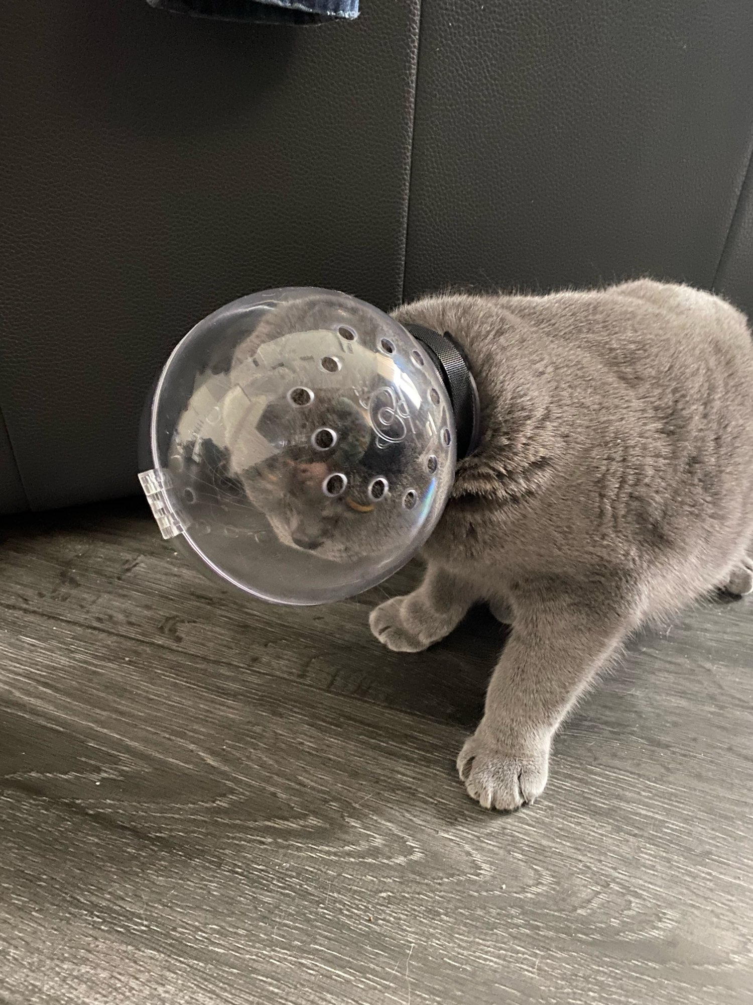 Cat Space Hood Mask photo review