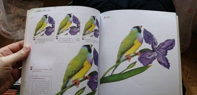 -- Coloração Coloração Pássaro