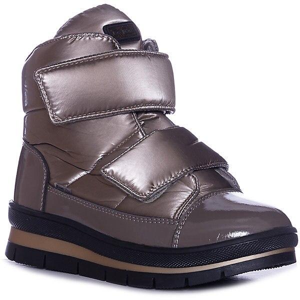 Sector de zapatos para perro