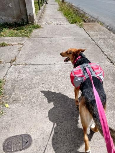 Dog Hiking Backpack | Dog Backpack Harness | Dog Hiking Gear | Dog Hiking Pack photo review
