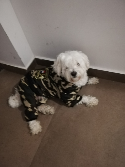 Large Dog Snowsuit | Waterproof Dog Snowsuit | Dog Winter Snowsuit photo review