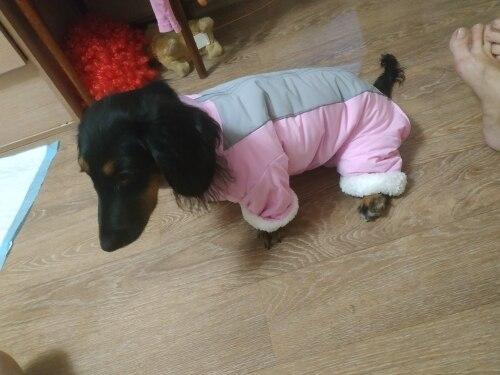 Waterproof Dog Snowsuit | Small Dog Snowsuit | Puppy Snowsuit | Dog Winter Snowsuit photo review