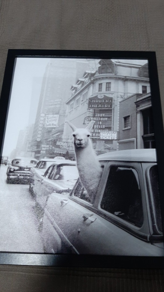 Alpacas Day Out Wall Art Twin set photo review
