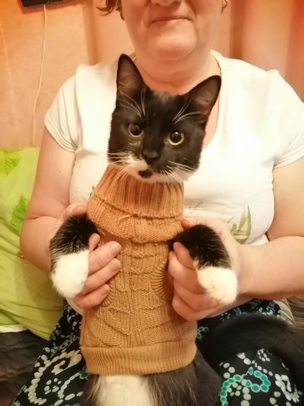 -- pequeno pequeno camisola