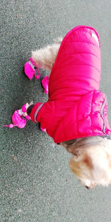 Small Dog Boots | Small Dog Winter Boots | Dog Boots for Small Dogs photo review