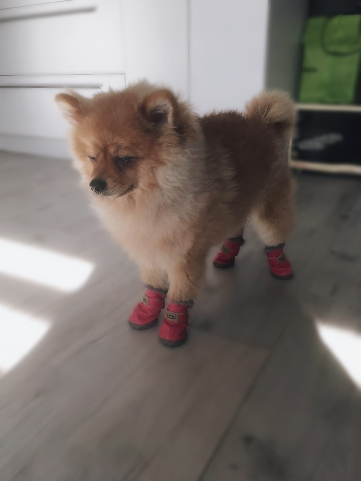 DogMEGA Winter Dog Boots | Small Dog Winter Boots | Best Dog Boots for Snow photo review