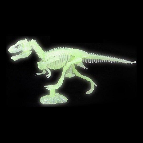 Skeleton Fluorescent 117488