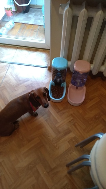 Automatic Pet feeder and drinker photo review