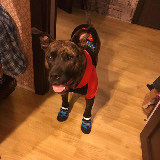 Large Dog Winter Boots | Anti-slip Dog Boots | Waterproof Dog Boots photo review