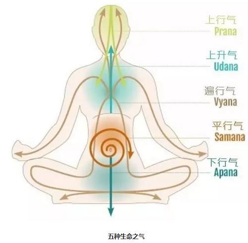 瑜伽动作进行增强气息 锻炼特殊瑜伽动作增强内气-养生法典