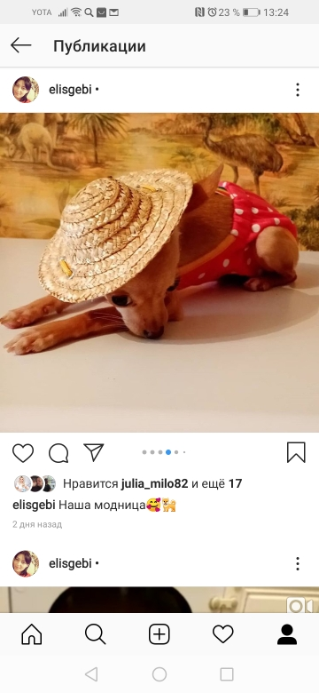 Straw Hat for Dogs   Dog Sun Hat   Cat Sun Hat   Outdoor Dog Accessories photo review