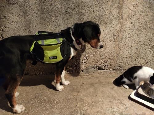 Dog Hiking Backpack   Dog Backpack Harness   Dog Hiking Gear   Dog Hiking Pack photo review