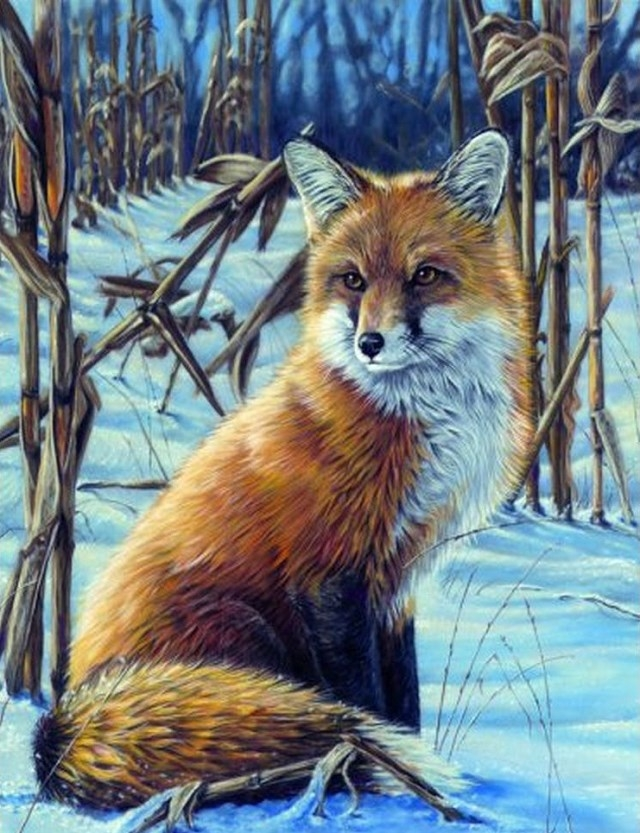Painting By Numbers Cunning Fox, 40x50 Cm