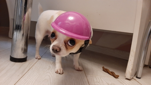 DogMEGA Dog Helmet and Goggles Kit photo review