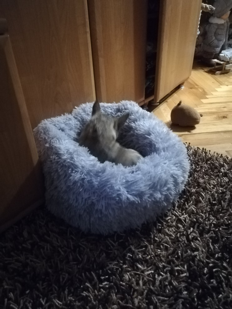 Round Plush Pet Bed photo review