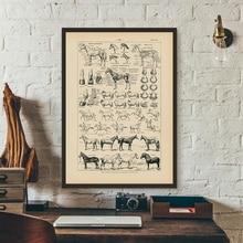 Cuadro de Anatomía de caballo francés Vintage impresiones de biología Arte de la pared Decoración, ilustración de caballo póster de animales lienzo decoración de oficina