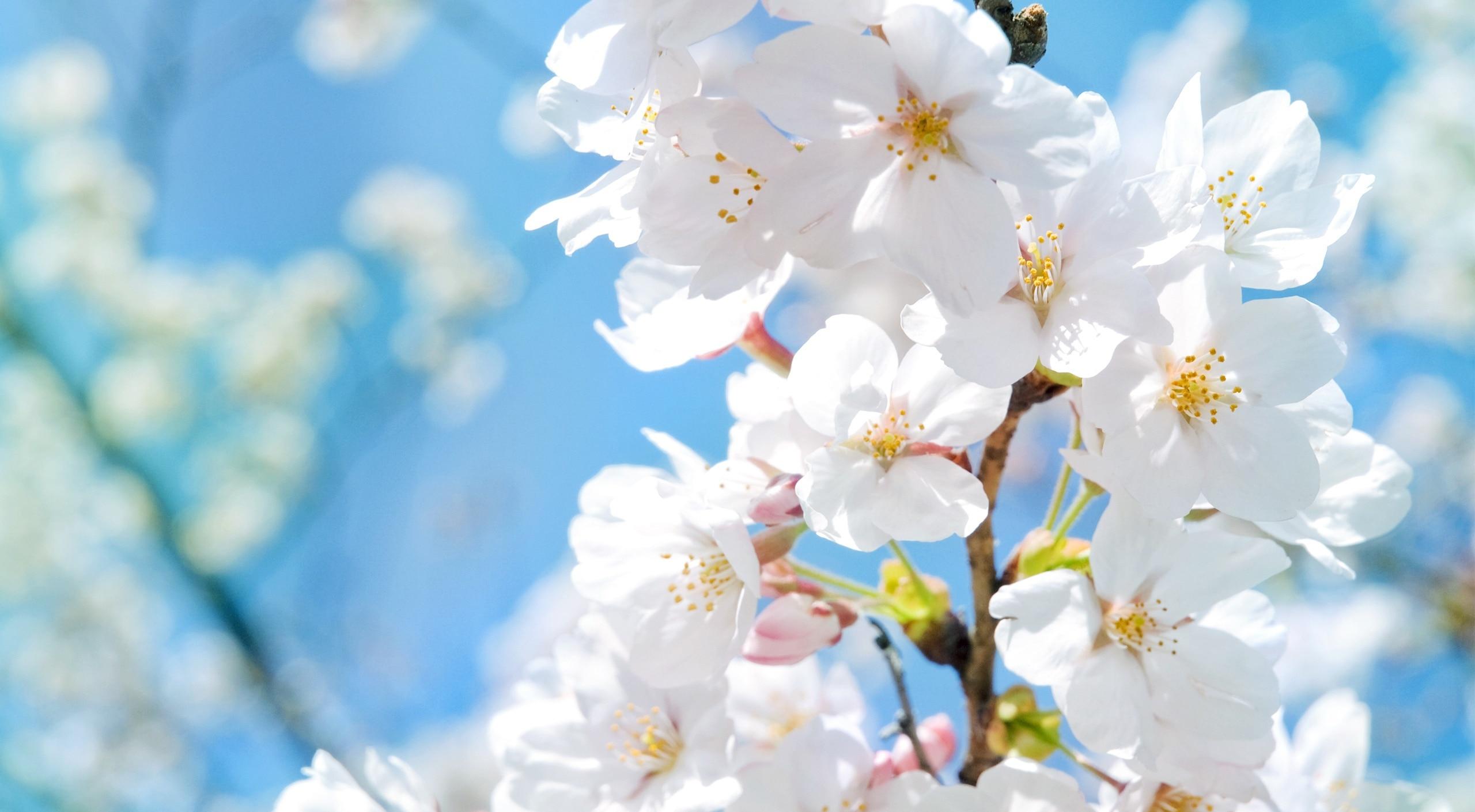 春暖花开的句子唯美