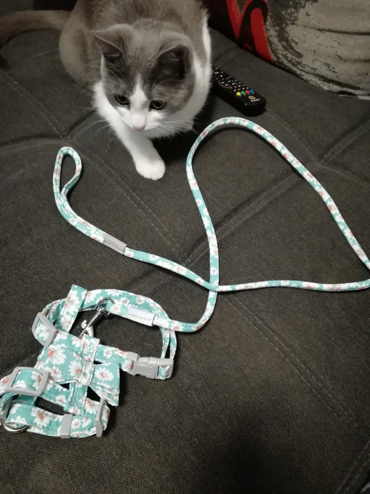 MEGA Cute Dog Harness and Leash photo review