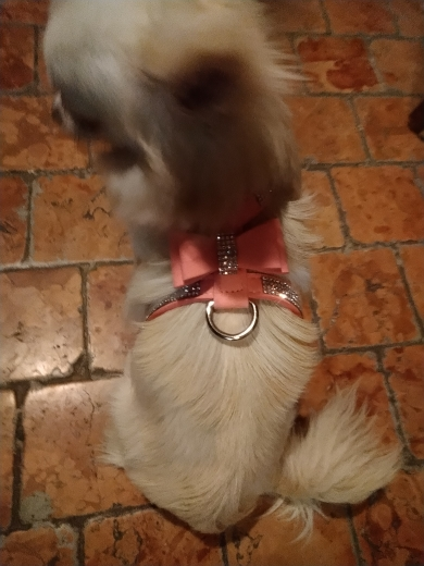 MEGA Cute Dog Harness for Small Dog photo review
