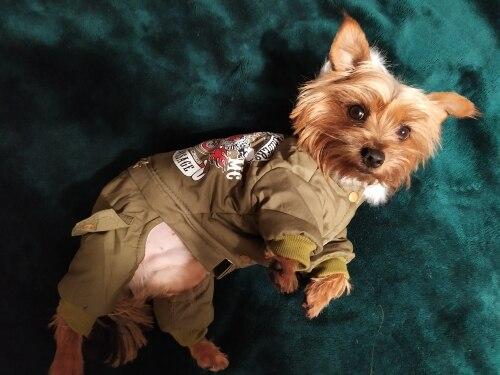 -- cachorro roupas algodão