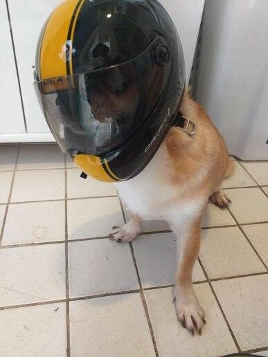 Bonés p/ cães Filhote Cachorro Animal